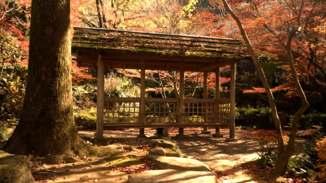 panning: nature aesthetics in japanese garden - pavilion video stock e b–roll