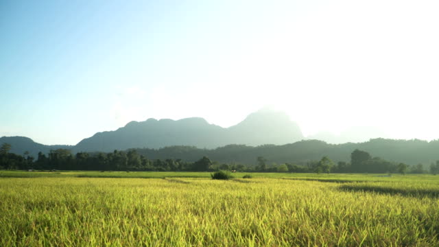panning: nature scene in vang vieng laos at sunset - hill stock videos & royalty-free footage