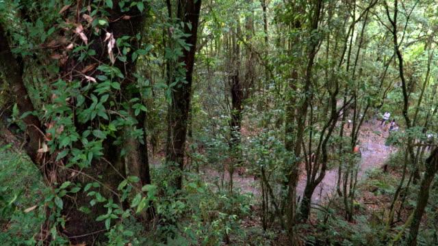ハイアングルのパン: 北タイの熱帯林の小道 - アノニマス点の映像素材/bロール