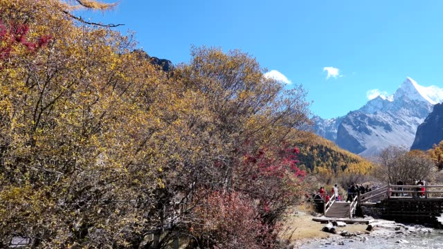 Panning of Holy Chana Dorje mountain with wooden bridge in autumn pine forest at Yading nature reserve
