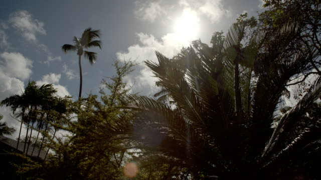 Panning of tropical trees
