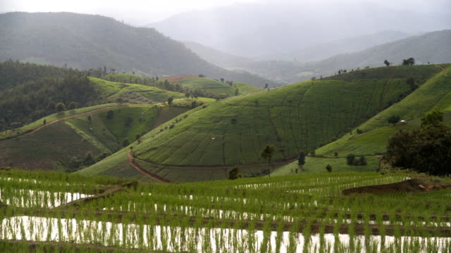 panning: only delighted rice terrace on mountain range
