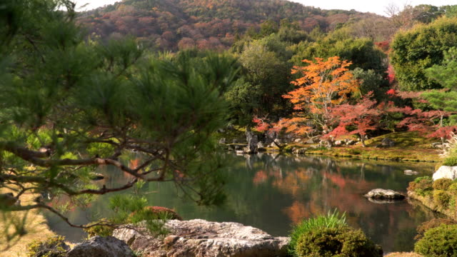 panning: ornamental japanese autumn leaf garden - autumn leaf color stock videos & royalty-free footage