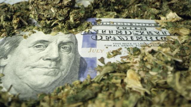 panning over 100 dollar bill covered with marijuana - snuff stock-videos und b-roll-filmmaterial