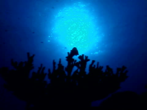 vídeos de stock, filmes e b-roll de panning past coral underwater - invertebrado