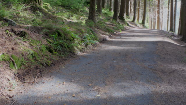panning :pine tree forest pan view,northern ireland - country road stock videos & royalty-free footage
