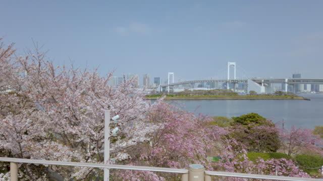 panning rainbow bridge in tokyo , japan - tilt up stock videos & royalty-free footage