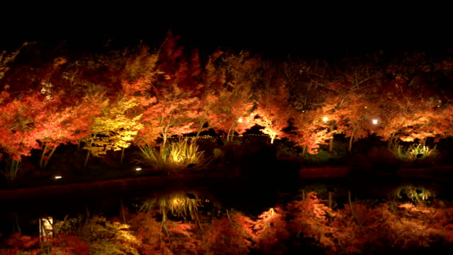 panning: red maple tree reflection on still pond at night - maple leaf stock videos & royalty-free footage