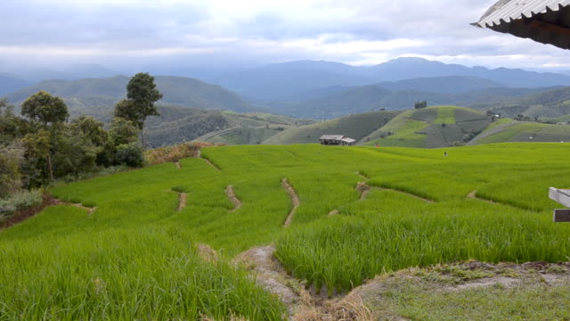 panning: rice terraced field under eaves - eaves stock videos and b-roll footage