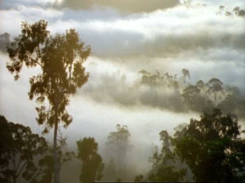 wa panning right, silhouetted rainforest canopy against dense sunlit mist, malaysia - tree canopy stock videos and b-roll footage