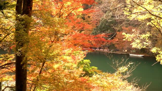 vídeos de stock e filmes b-roll de panning: river amid autumn leaf forest at arashiyama - ácer