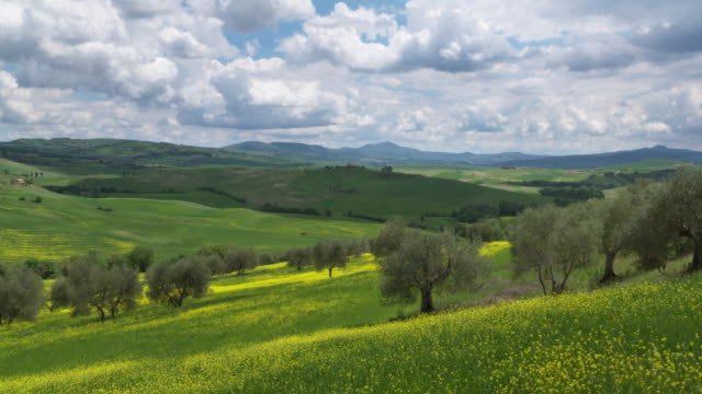 panning rolling landscape with rapeseed field and olive trees. pienza, tuscany, italdy, europe. - 40 seconds or greater stock videos & royalty-free footage