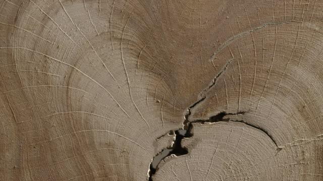 Panning shot across a cross section of a fallen tree.
