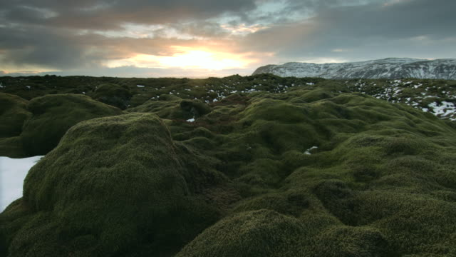 panning shot across a field of moss covered rocks in south iceland.  - moss stock videos & royalty-free footage