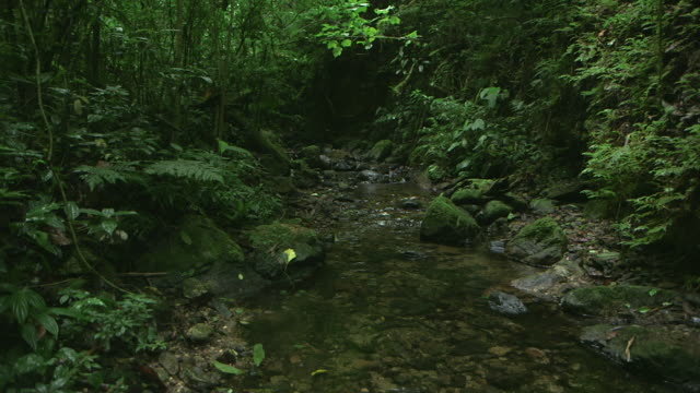Panning shot across a gently flowing stream in the El Triunfo biosphere reserve.