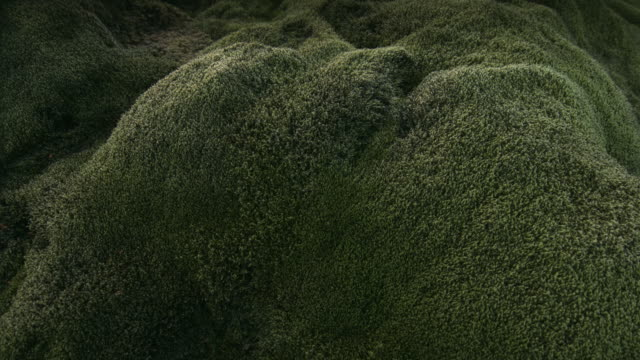 panning shot across moss covered rocks.  - moss stock videos & royalty-free footage