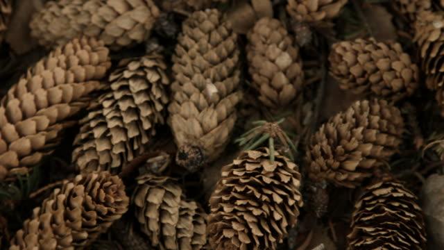 panning shot across pine cones. - パインコーン点の映像素材/bロール