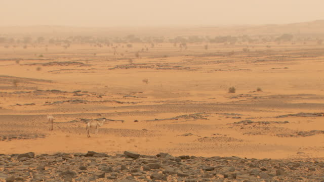 Panning shot across the desert landscape at Nuri in Sudan.