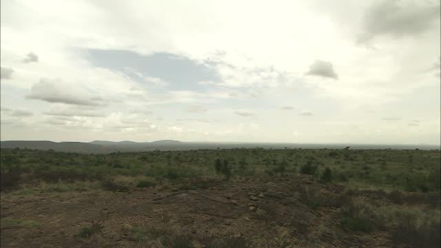 Panning shot across the savannah in Laikipia County.