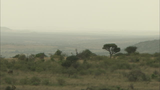 panning shot across the savannah in laikipia county. - grass area stock videos and b-roll footage