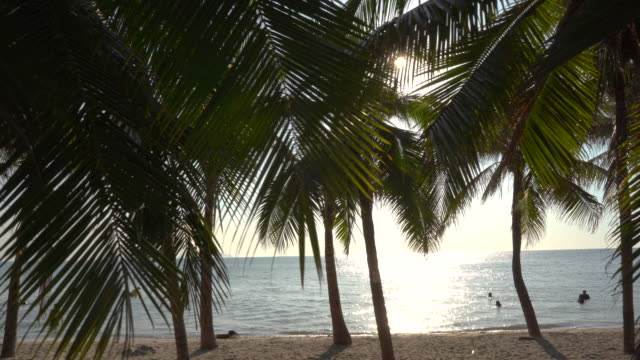 panning shot - coconut tree on the tropical beach - fan palm tree stock videos & royalty-free footage