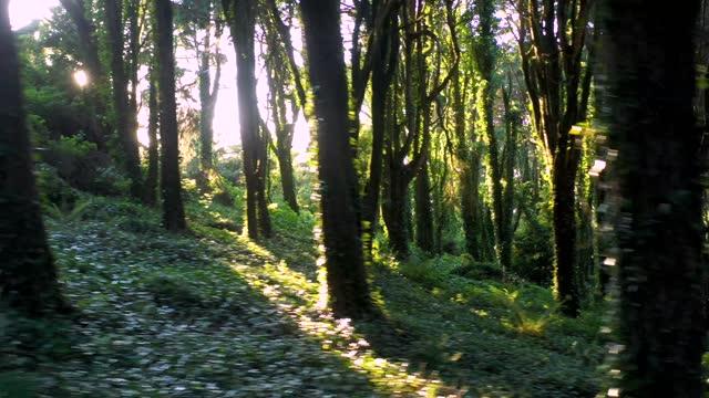 panning shot - low angle shot of tall trees in bright day - サウンドトラック点の映像素材/bロール