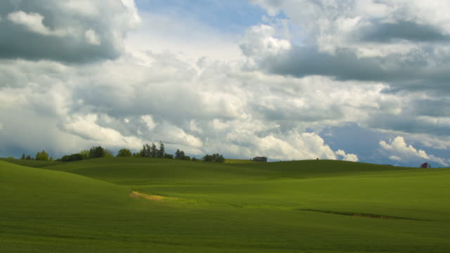 panning shot of a field during daytime - palouse stock videos & royalty-free footage