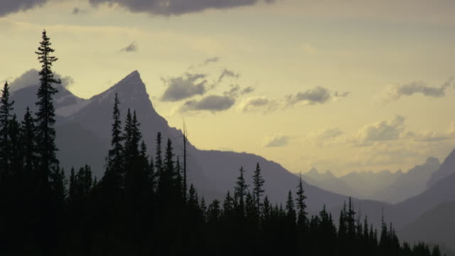 panning shot of a forest and the canadian rocky mountains near jasper national park at sunset in alberta, canada - coniferous stock videos & royalty-free footage
