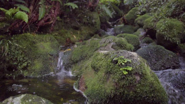 panning shot of a small stream with rocks and ferns in a dense forest - moss stock videos & royalty-free footage