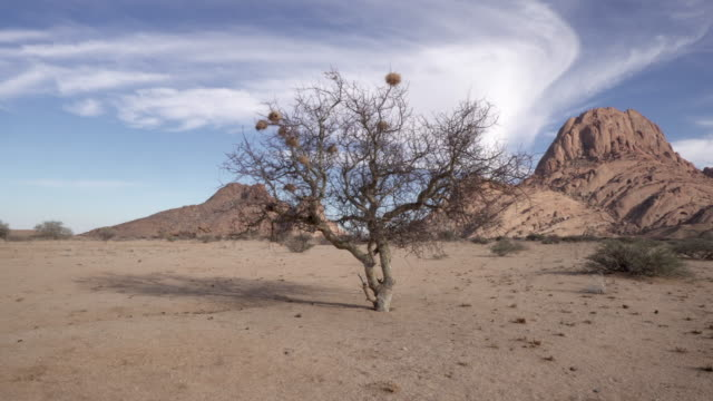 vidéos et rushes de panning shot of bare tree on desert landscape at remote location against cloudy sky - spitzkoppe, namibia - bare tree