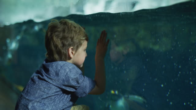 Panning shot of boy leaning on glass watching penguins swimming in aquarium / Draper, Utah, United States