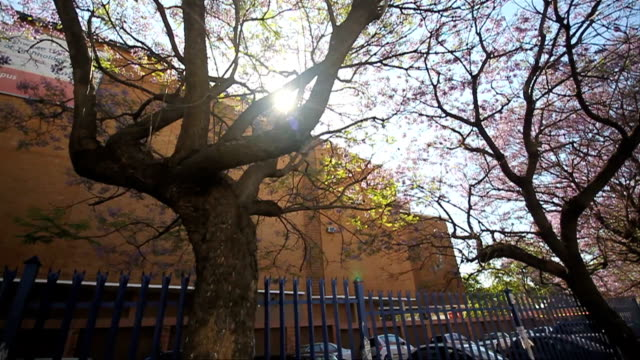 panning shot of building through jacaranda trees/ pretoria/ south africa - pretoria stock videos & royalty-free footage