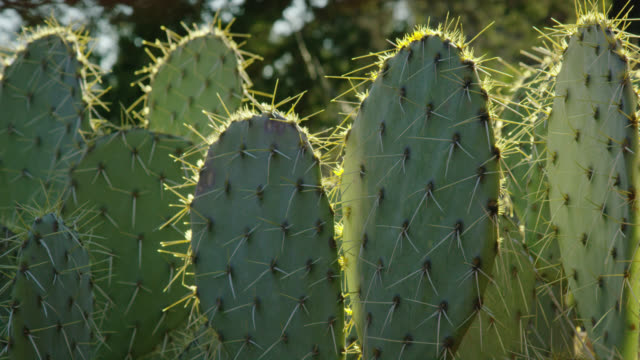 panning shot of cacti outdoors on a sunny afternoon - sedona stock videos & royalty-free footage