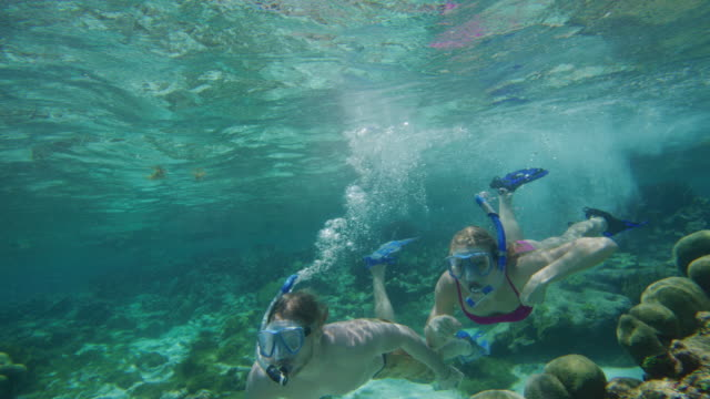 vídeos de stock e filmes b-roll de panning shot of couple snorkeling underwater in ocean / tobago cays, saint vincent and the grenadines - activity