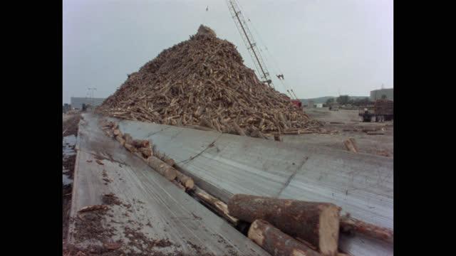 panning shot of crane unloading wooden logs on conveyor belt in lumberyard, maine, usa - forestry industry stock videos & royalty-free footage