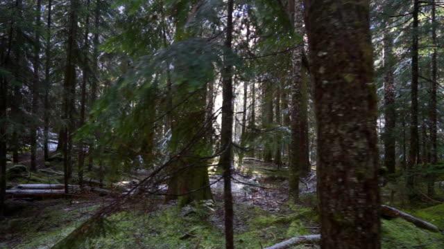 panning shot of green trees with logs and snow in woodland at famous garibaldi provincial park - cheakamus lake, british columbia - garibaldi park stock videos & royalty-free footage