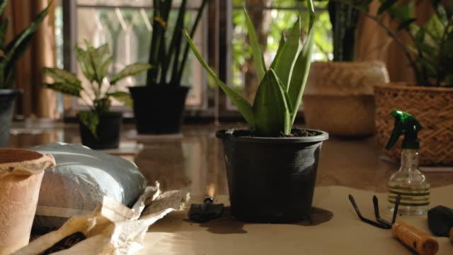 自宅のリビングルームで観葉植物やガーデニング機器のパンニングショット - 観葉植物点の映像素材/bロール