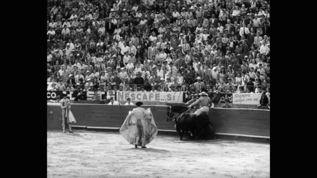 1951 - panning shot of matador fighting with bull in bullring, bull gores horse - bull animal stock videos & royalty-free footage