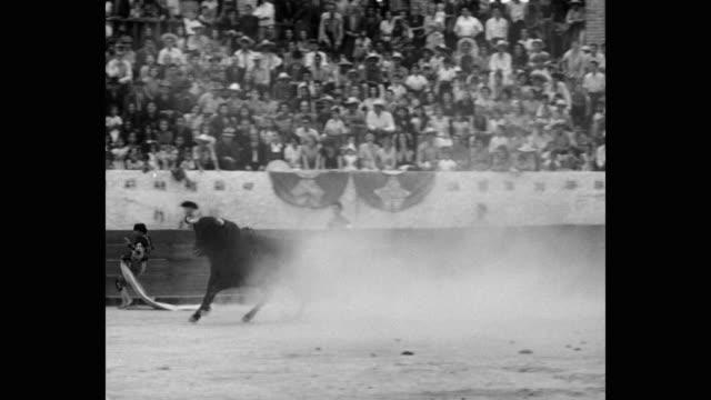 1951 panning shot of matador fighting with bull in bullring - bull animal stock videos & royalty-free footage