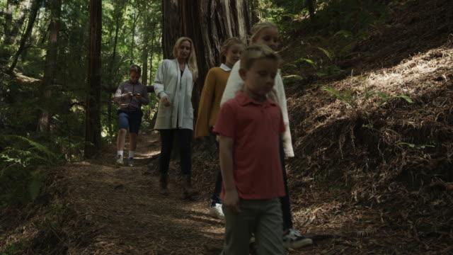 vidéos et rushes de panning shot of mother and children walking downhill on path in forest / muir woods, california, united states - famille avec quatre enfants