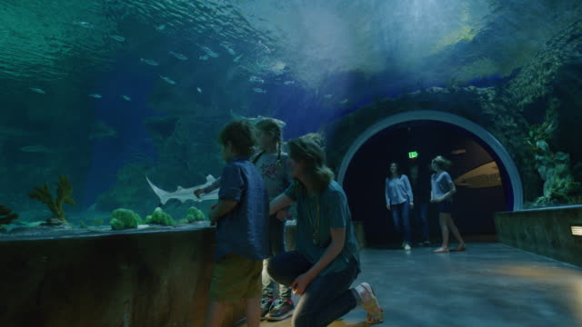 vídeos de stock, filmes e b-roll de panning shot of mother and children walking in aquarium tunnel with fish swimming overhead / draper, utah, united states - aquário edifício para cativeiro animal
