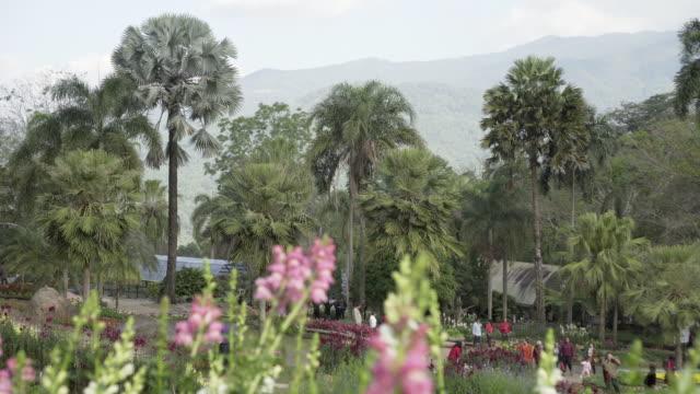 vidéos et rushes de panning shot of people exploring park with flowering plants against mountains - chiang rai, thailand - âges mélangés