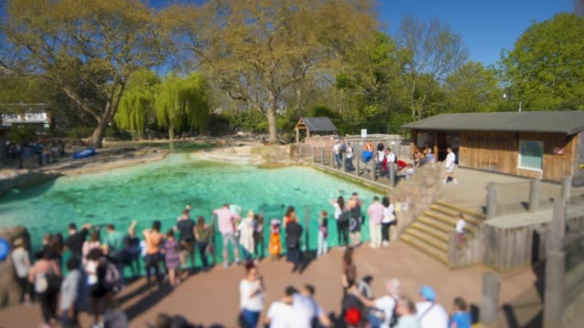 panning shot of the penguin pool at the london zoo. - zoo stock videos & royalty-free footage