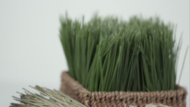 panning shot of wheatgrass and vitamin bottle. - vitamin d stock videos & royalty-free footage