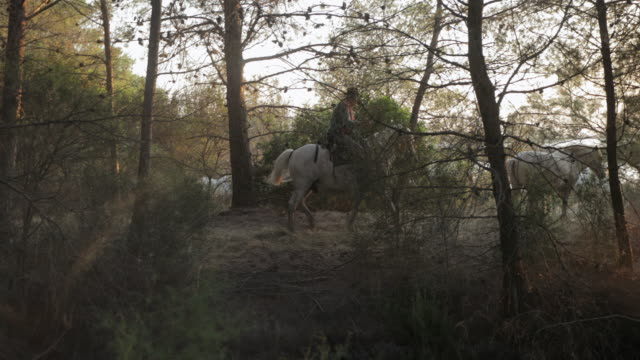 panning shot of wrangler riding horse amidst plants and trees in forest - camargue, france - weg stock-videos und b-roll-filmmaterial