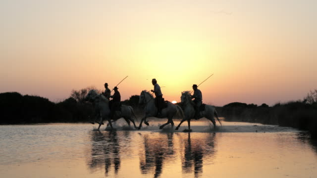panning shot of wranglers riding horses in sea against clear orange sky during sunset - camargue, france - silhouette stock videos & royalty-free footage