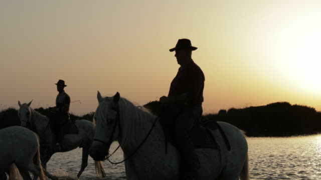 panning shot of wranglers riding while herding horses in sea against sky during sunset - camargue, france - rodeo stock videos & royalty-free footage