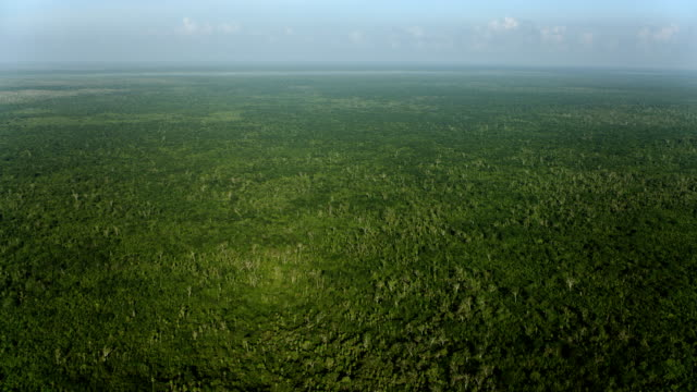 panning shot over yucatan forest - yucatan peninsula stock videos and b-roll footage