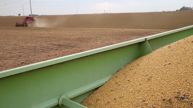 panning shot soybeans are harvested on october 2 2013 near worthington minnesota - soybean stock videos and b-roll footage