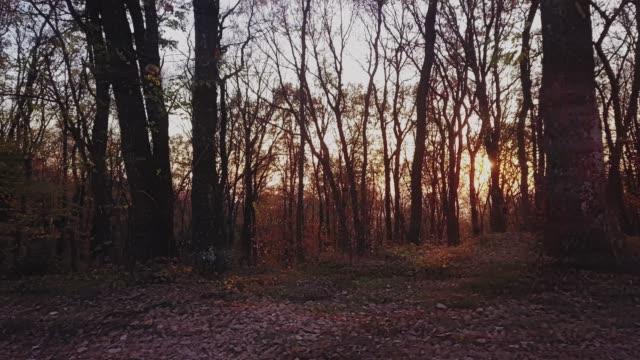 vídeos y material grabado en eventos de stock de panning disparado a través del bosque durante una puesta de sol - back lit